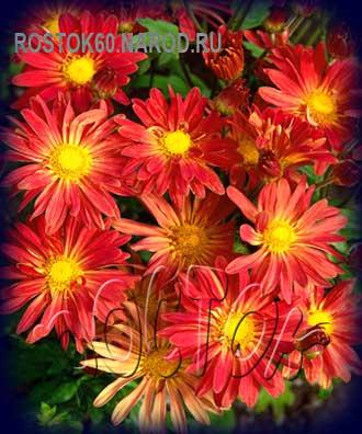 Доставка цветов козельщина